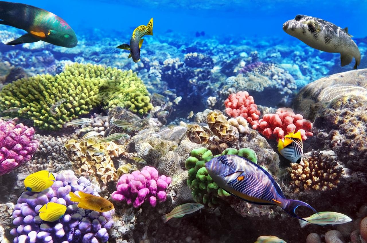 Красное Море - одна из главных достопримечательностей Египта