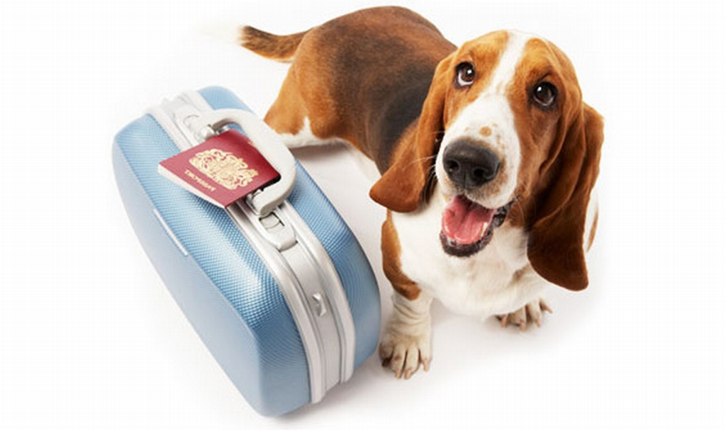 Отели принимающие с собаками
